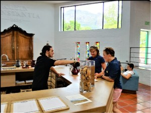 Bike and Hike Wine Tasting at Klein Constantia