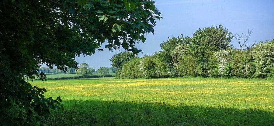A beautiful field in pastoral England