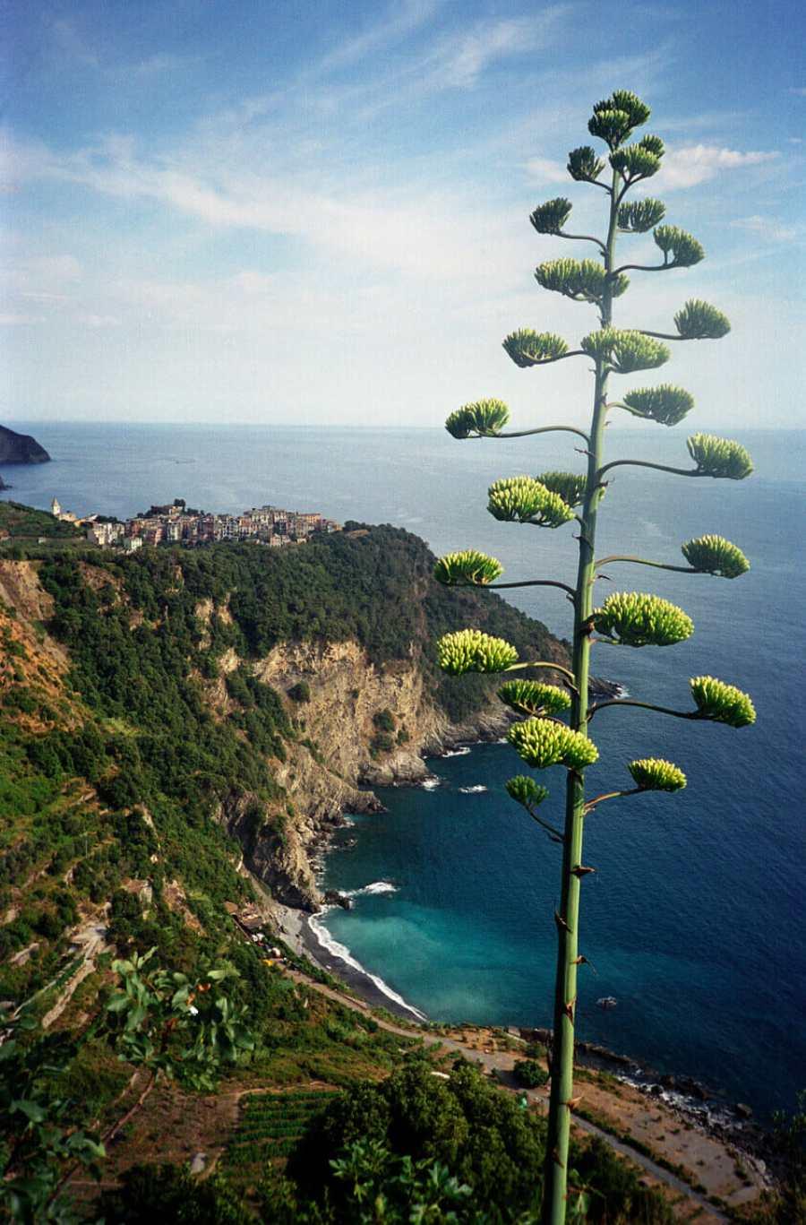 cinque terre overlooking the sea