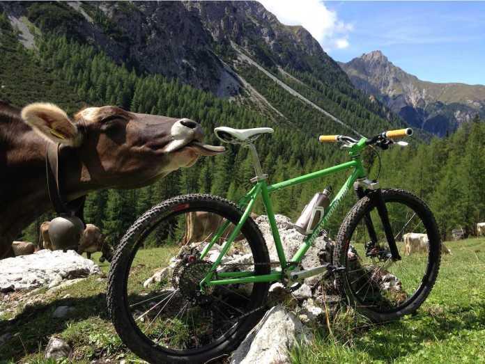 bikerumor pic of the day mountain biking in Uina Gorge, in Graubunden, Switzerland with cows.