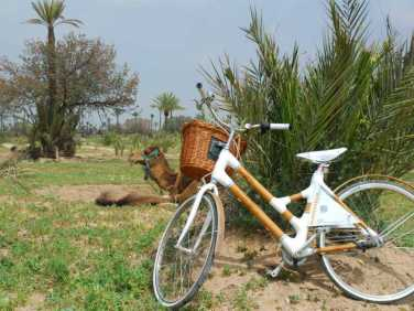 Cycling to the Palmeraie