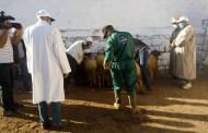 إقليم ميدلت .. ارتياح لدى التجار بعد فتح الأسواق الأسبوعية من جديد بمنطقة الريش