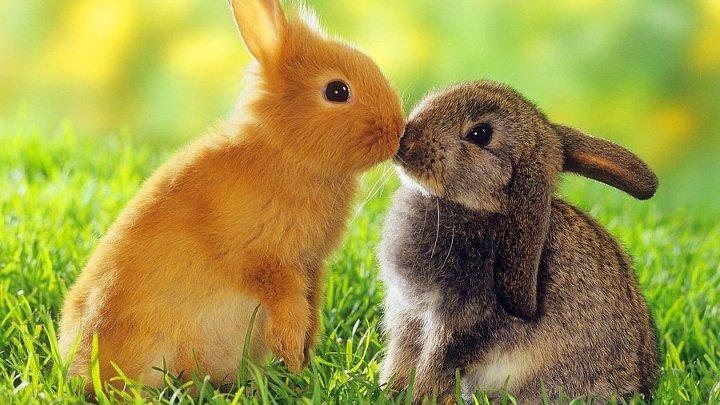 Erkek Dişi Tavşan İsimleri