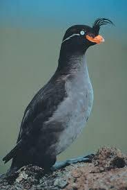 denizku%C5%9Fu - Destroyed 6 Animal Species