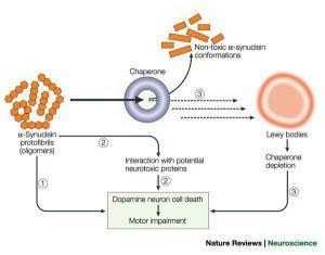 14069 nrn1199 f3 300x235 - The Molecular Mechanisms That Causes Parkinson's Disease