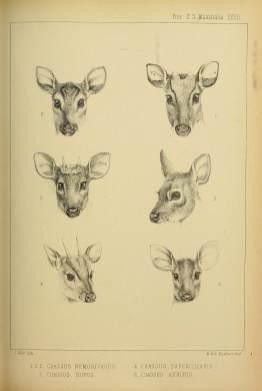 6 tane kariyaku türü gediğin kafa çizimi