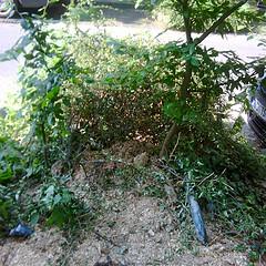 Baum geschreddert.