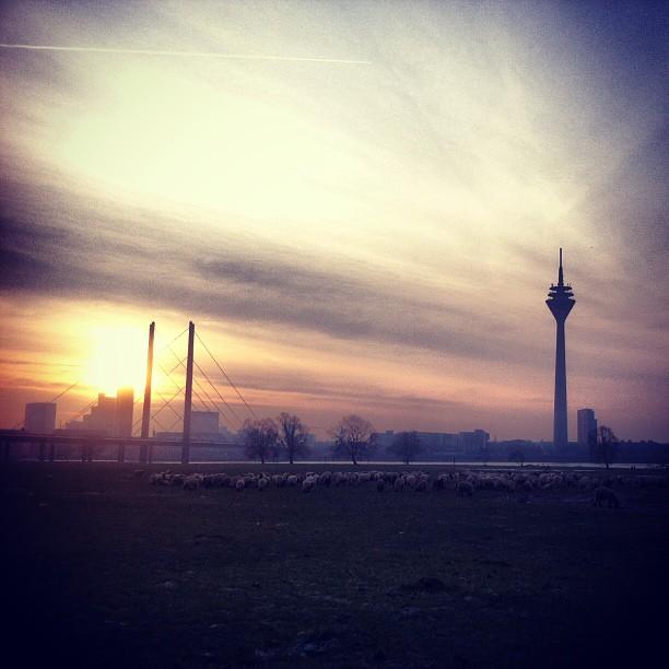 Ein morgen auf der Alm #duesseldorf