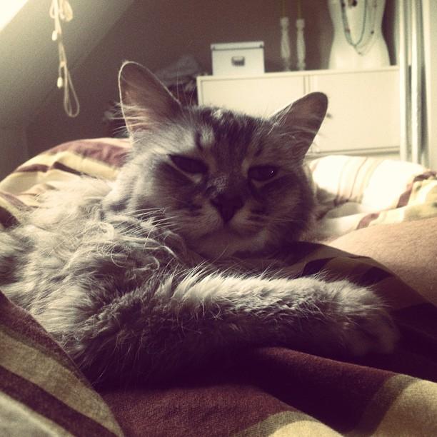 """Wünsche euch einen gemütlichen """"internationalen Tag der Katzen"""""""