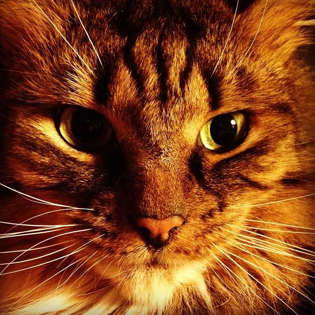 Wer als Erster blinzelt hat verloren und muss unser Katzenklo saubermachen...