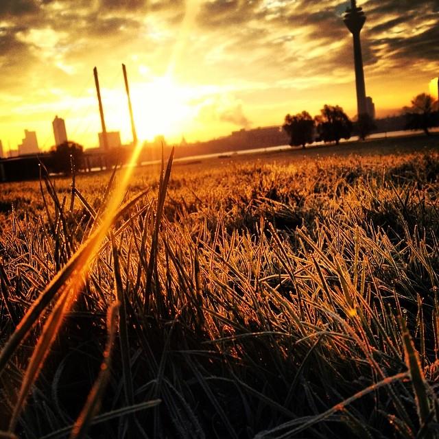 Raureif auf den Rheinwiesen, warme Socken und einen Herbst-Sonnenaufgang.