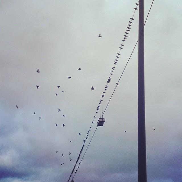 """Frei nach Lao-tse : """"Eine Reise von tausend Meilen beginnt mit einem einzigen Flügelschlag"""" :-)"""