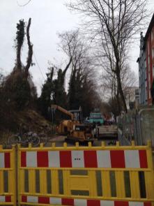 Baumfällung Färberstraße