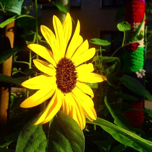 Sag's mit (gepflanzten) Blumen ;-)