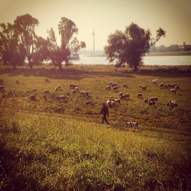 Kurze Zwischenstopp und zwei Minuten Schafe gucken :-)