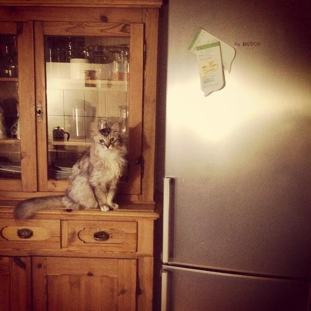 Dank der Hilfe des schnurrenden Scouts habe ich den Weg zum Kühlschrank gefunden ;-)