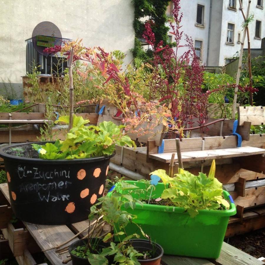 Wie geht's weiter mit dem Urban Gardening Projekt Düsselgrün?