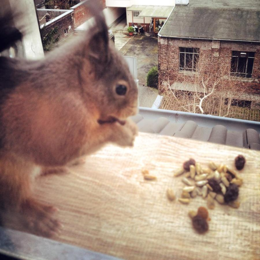 Nuss-Gourmet auf'm Fensterbrett