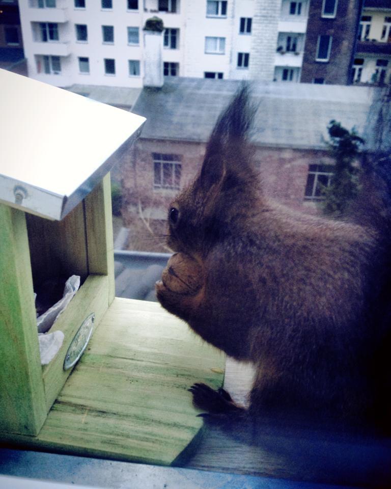 Unser Eichhörnchen ist ein kleiner Ordnungsfetischist