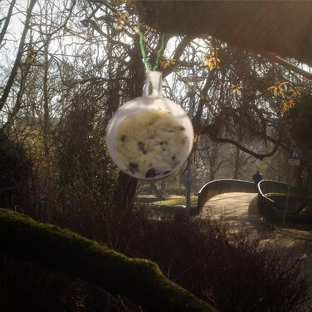 Selbstgemachte Meisenknödel im Park – ich mag unsere Nachbarn dafür :-)