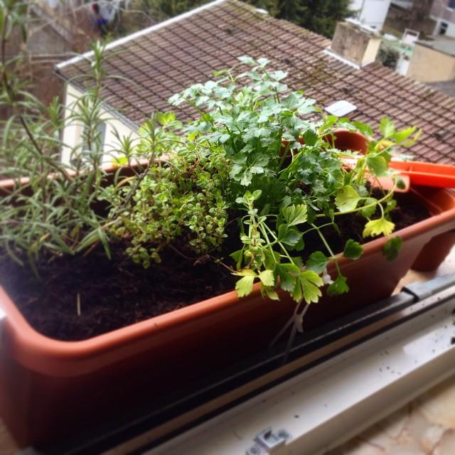 Ein kleiner Kräutergarten, aber dafür mit guter Aussicht :-)