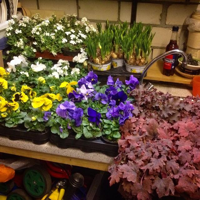 Haben da mal ein paar Pflanzen für's Plätzchen geholt :-)