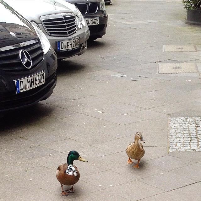 Das nette Pärchen vom nebenan flaniert mal wieder über die Düsselstraße :-)