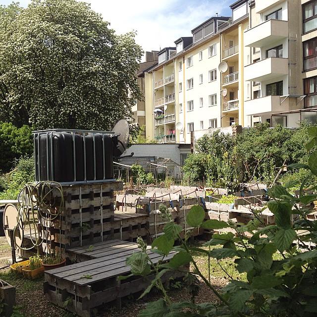 Ein wenig bei düsselgrün abhängen und sich über Pflanzen informieren lassen :-)