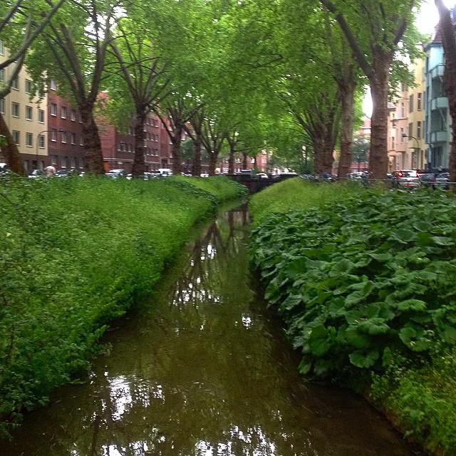 Geht es eigentlich nur mir so... auf der Höhe der Binterimstraße riecht die Düssel einfach nur nach Rhabarber ;-)