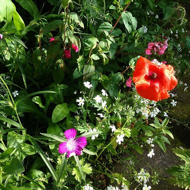 Ich mag unsere kleine Blumeninsel auf der Straße - einige Bienen, Marienkäfer und Hummeln sehen dies auch so ;-)