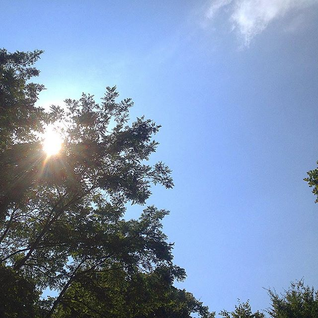 Schattenplätzken im Park.