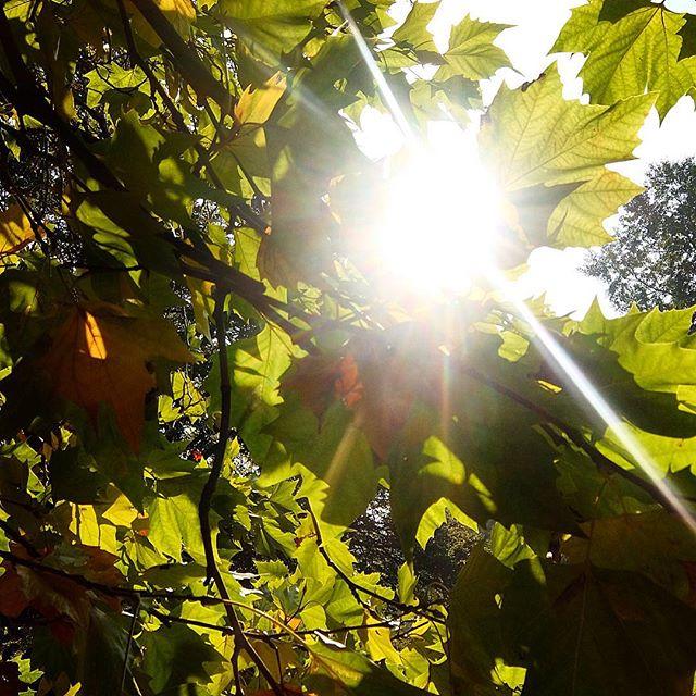 Sonne auf dem Rest vom Blätterdach...