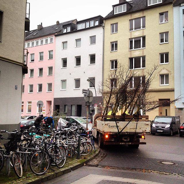 Es wird bald Frühling, die Bäume schl.... ähm ... werden ausgesetzt :-) Die letzten Ela Nachwehen werden geschlossen und einige Baumscheiben werden wieder begrünt & bepflanzt.