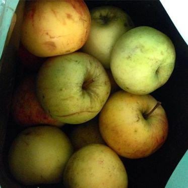 Apfelernte 2016 - frisch aus'm Schrebergarten in den Mund :-)
