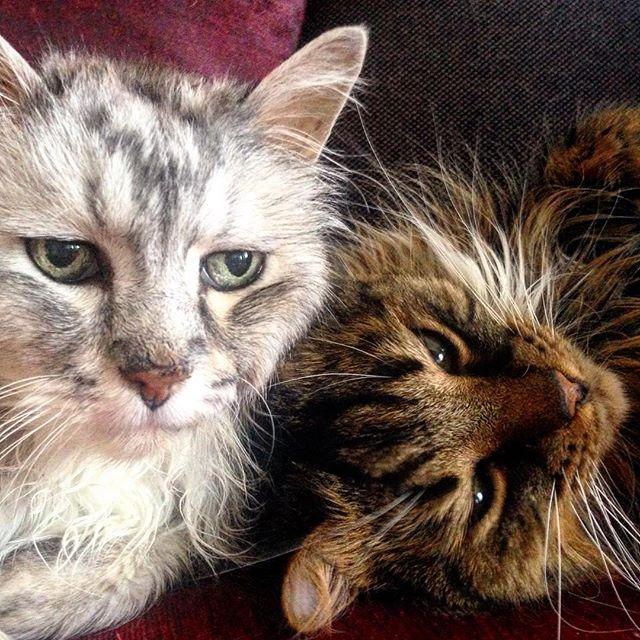 Katzencontent am Montagmorgen