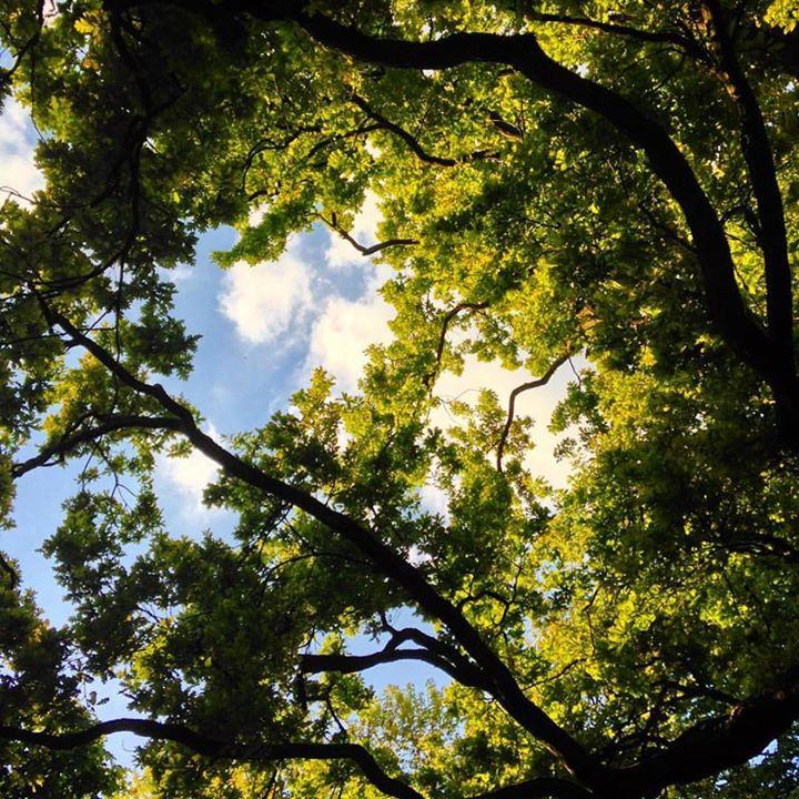 Durchatmen und hoch ins Grüne blicken.