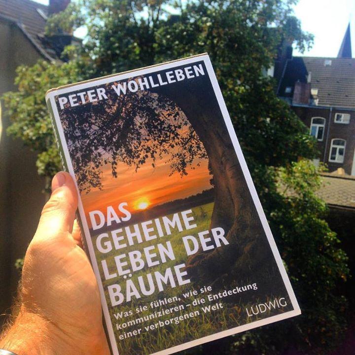 """Urlaubslektüre """"Das geheime Leben der Bäume"""""""