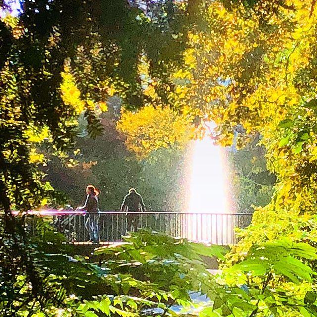 Unter Bäumen laufen oder einfach nur ein wenig 'Baum baden'