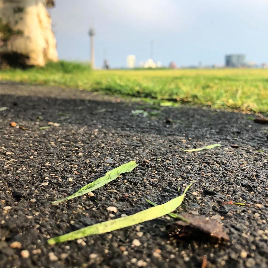 """Dies muss dieser """"Schutz der biologischen Vielfalt in Stadt und Landschaft"""" sein – und die ausgearbeiteten """"Lösungsansätze rund um das Schwerpunktthema """"Insektensterben"""" der Umweltdezernentin… warum wurde heute gleich nochmal grossflächig gemäht? *grübel* Aber welche Insekten brauchen denn jetzt schon Gänseblümchen, Klee, Löwenzahn oder andere frühe Korbblütler?! Ich dachte die Stadt @duesseldorf  wollte etwas für die Verbesserung des Nahrungsangebots für Insekten unternehmen, oder hab ich da etwas falsch verstanden? Vielleicht findet  in der Verwaltung auch jemand Blumenwiesen einfach nur kacke und ihm sind Insekten egal und monotoner 1 cm hoher Rasen ist schick… Kann sein. Dann soll man sich aber die Druckkosten für Flyer rund ums Thema : Schutz der Insekten sparen. Bringen wir diese Stadt zum blühen – Umweltschutz ist und bleibt Handarbeit und kann nicht delegiert werden."""