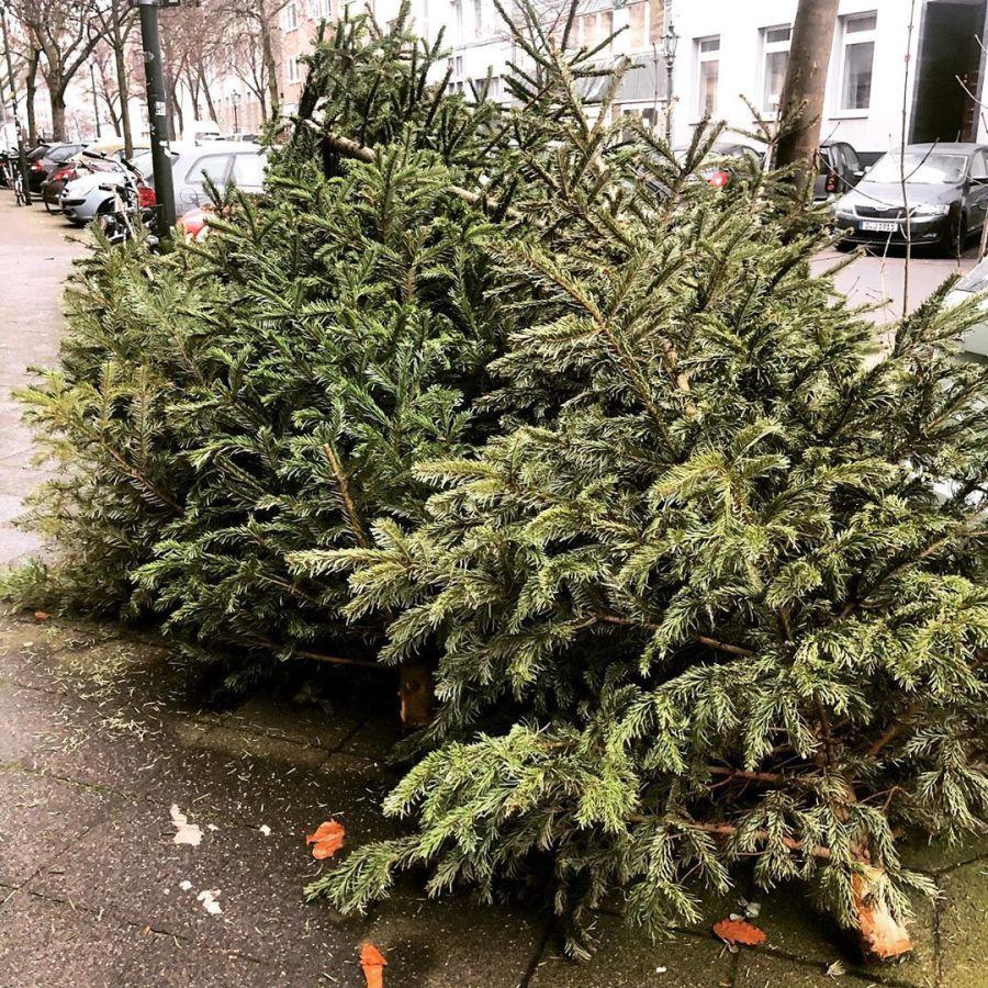 Tannenbäume bzw Dekorationselemente am Wegesrand. Hab den Eindruck das es in diesem Jahr deutlich weniger Weihnachtsbäume waren (also bei uns im Wohnquartier) als in den Vorjahren… es wäre schön wenn es mehr dauerhafte Lösungen gäbe und nicht Bäume die in Plantagen über Jahre gezüchtet werden um dann frisch geschlagen (sic!) im Wohnzimmer vor sich hinnadeln würden…