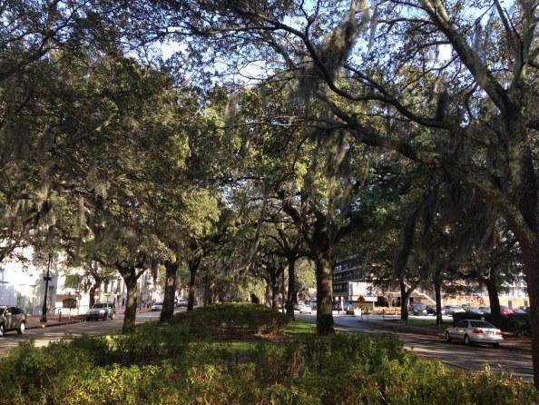 Oglethorpe_Avenue_median