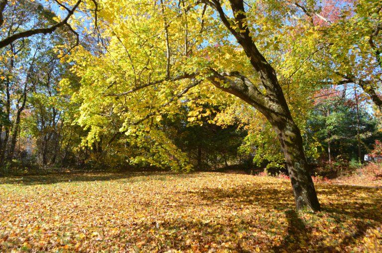 Fall at Bill Harley's house