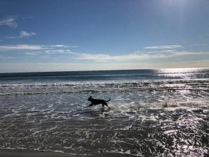 Django on the beach