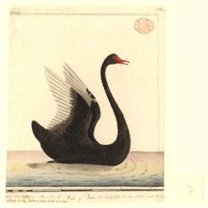 Nassim N. Taleb's Black Swan