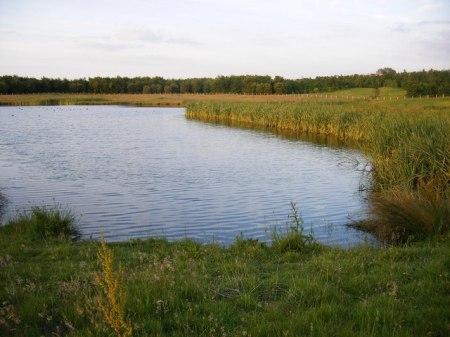 Rainton Meadows Nature Reserve