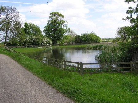 Pond at Heworth House Farm, also the site of the Medieval Village of Heworth (11th century)