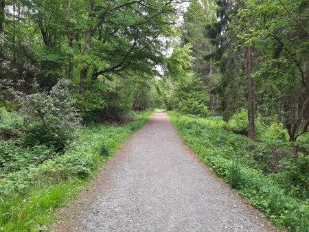 The main track in Milkwellburn wood