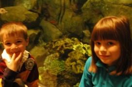 At the Shedd Aquarium