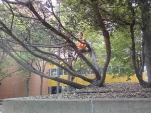 Liam climbing tree