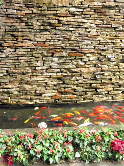 Goldfish in a pool with what I'm guessing is a more modern take on mid-century modern. French Concession, Shanghai, China, Asia.
